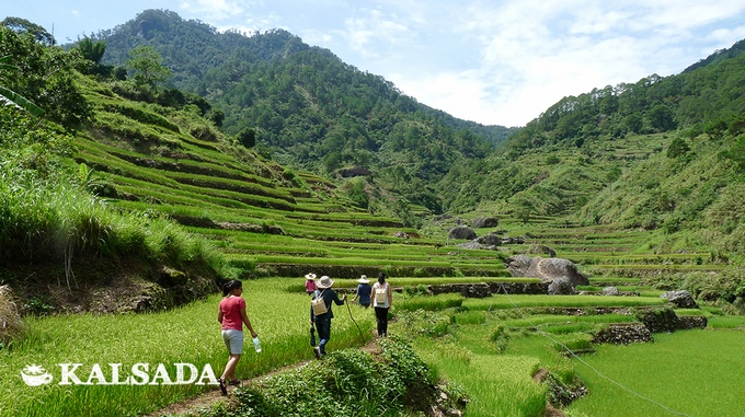 Coffee farms in Mountain Province, Philippines. Photo courtesy of Kalsada Coffee.