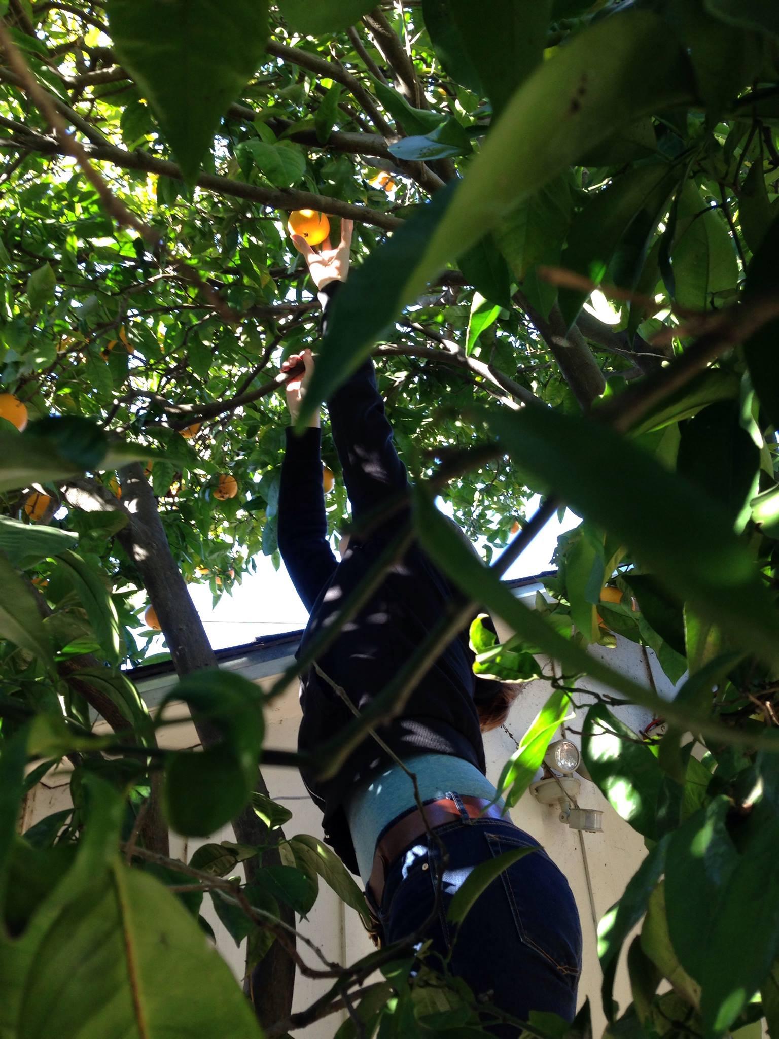 CJP in the Preminger Tree