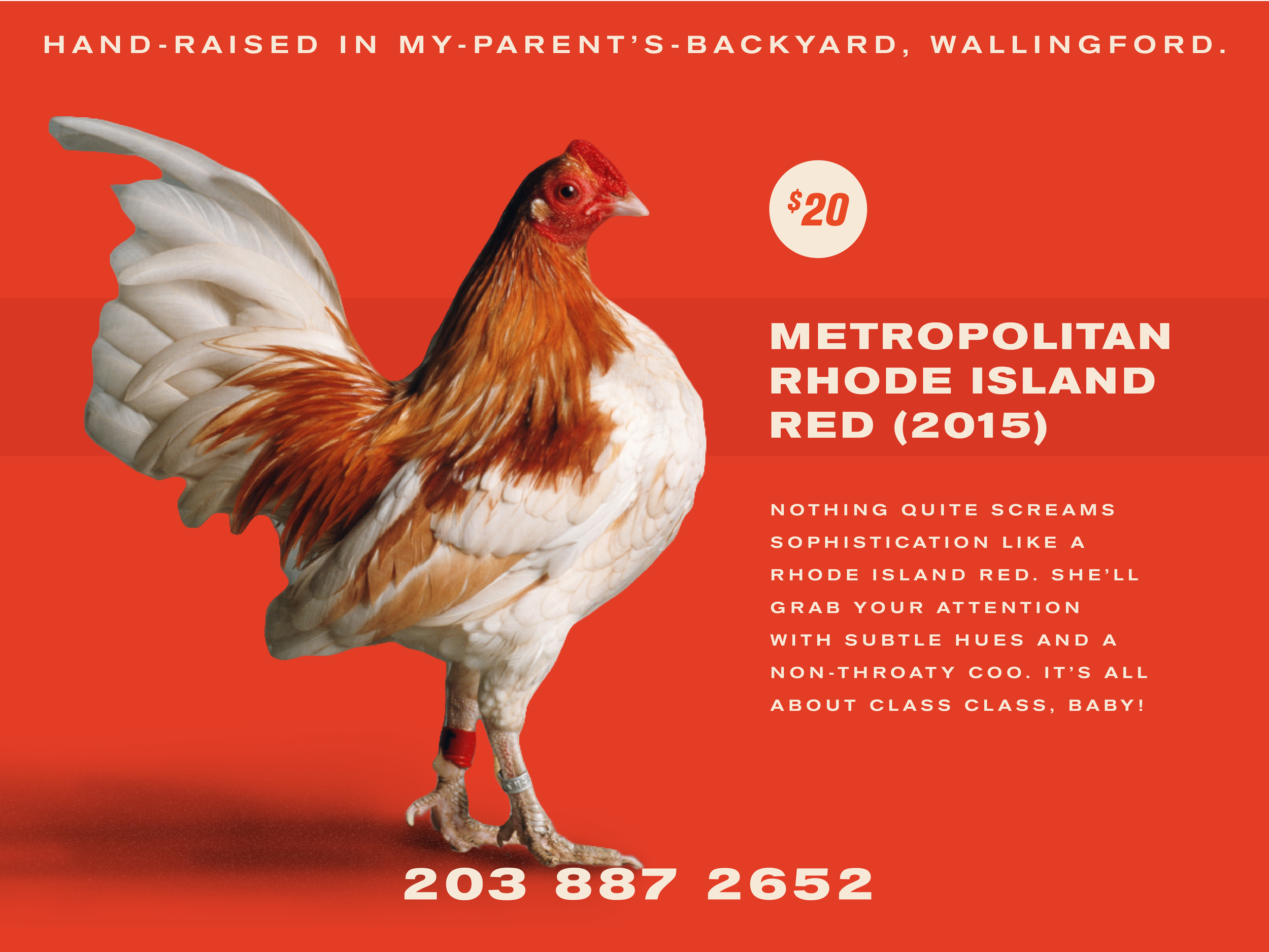 chickensforsale!!!-06.png