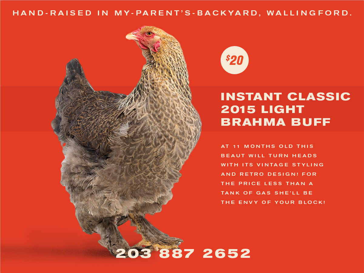 chickensforsale!!!-03.png