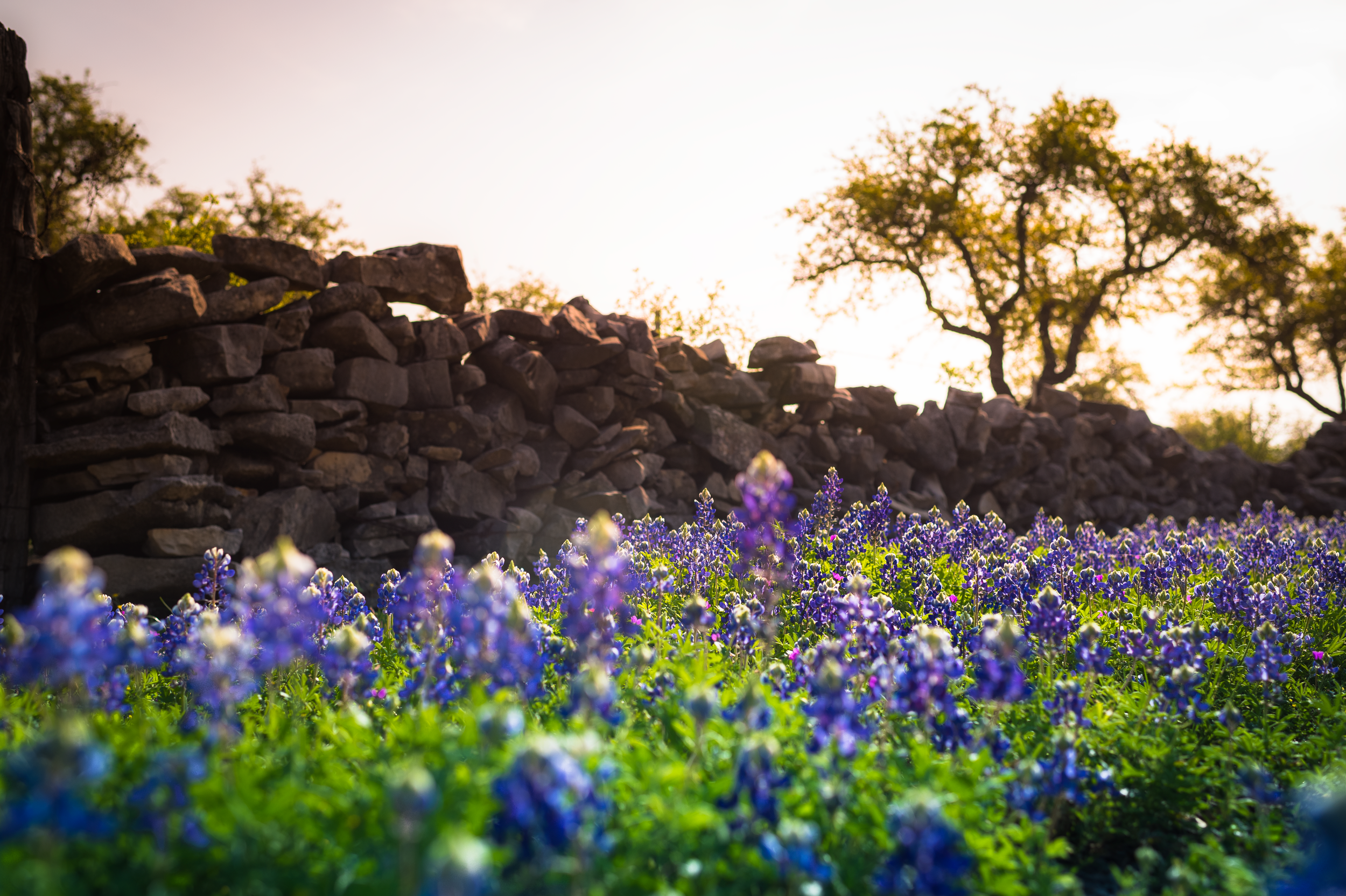 Sunset-Bluebonnets.png