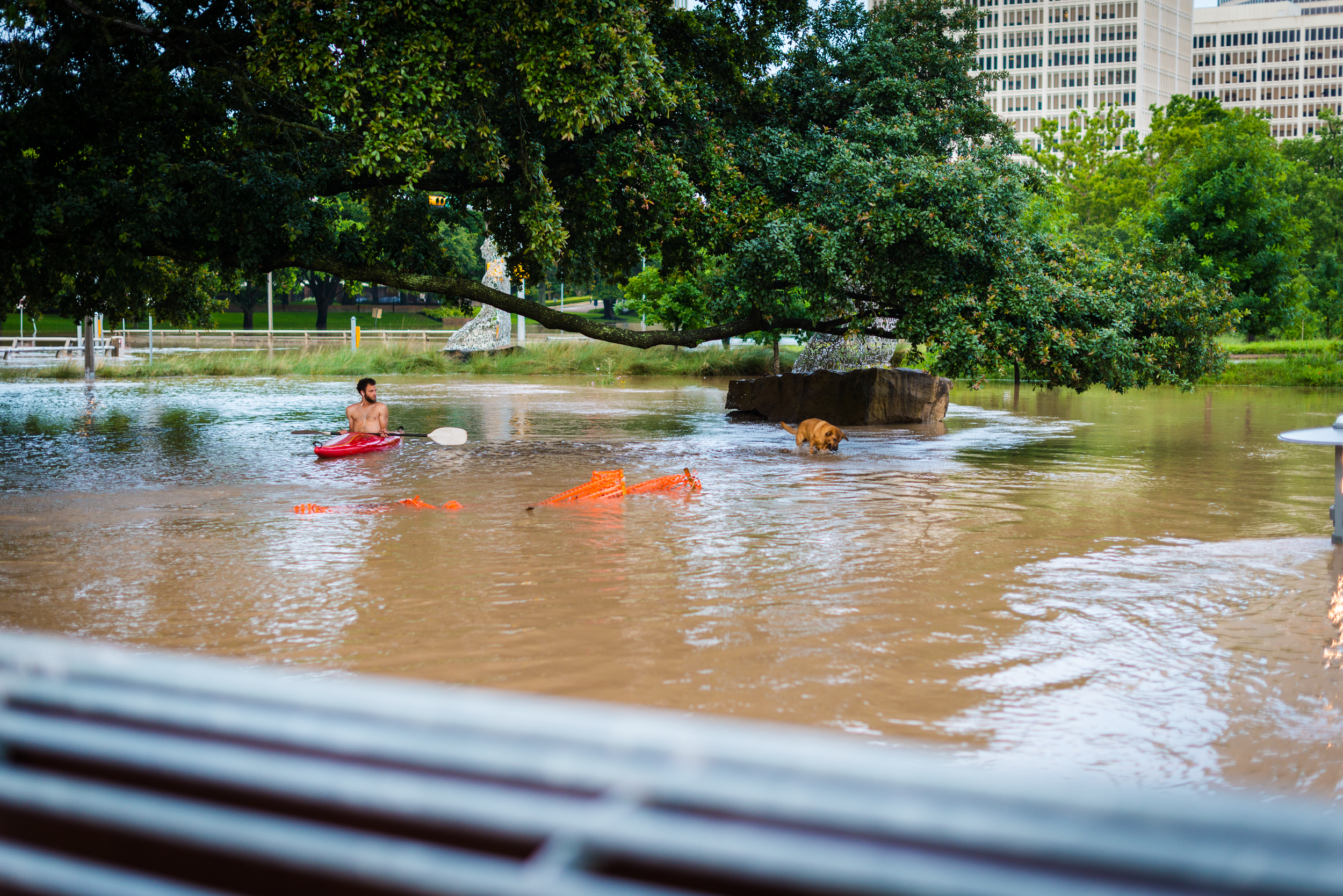 This Kayaker and his dog are paddling near Allen Parkway and Montrose on May 26, 2015.