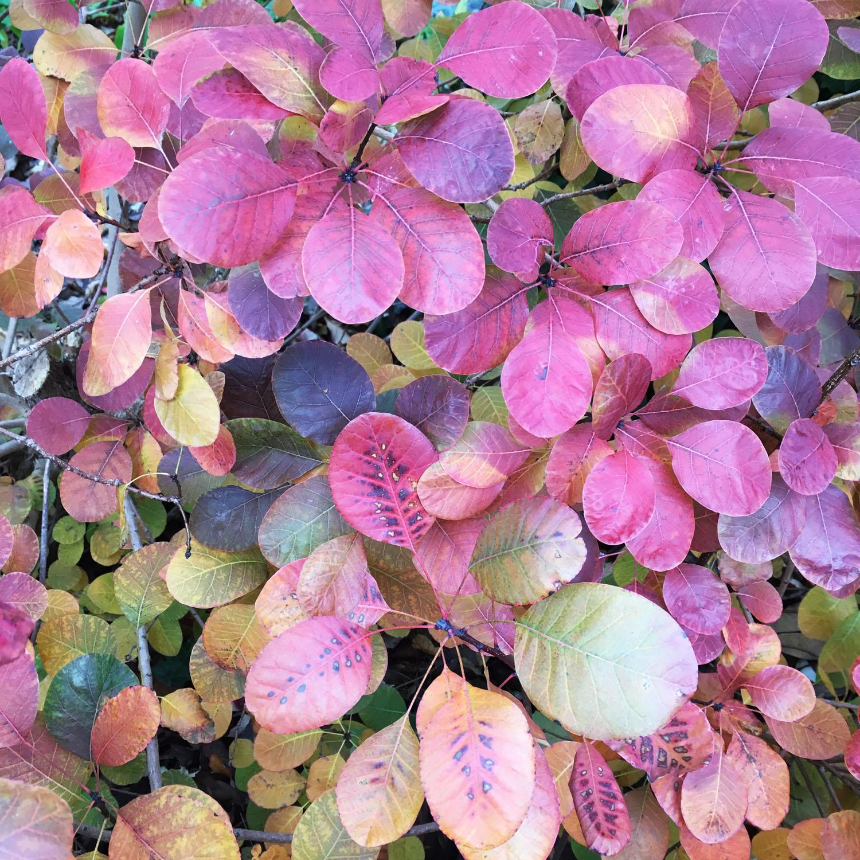 Purple and green leaves.jpg