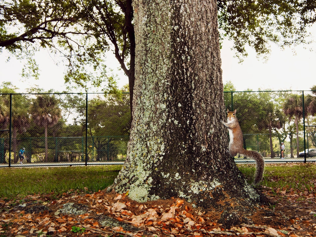 The New York Times Magazine, 'Letter of Recommendation: Squirrels'