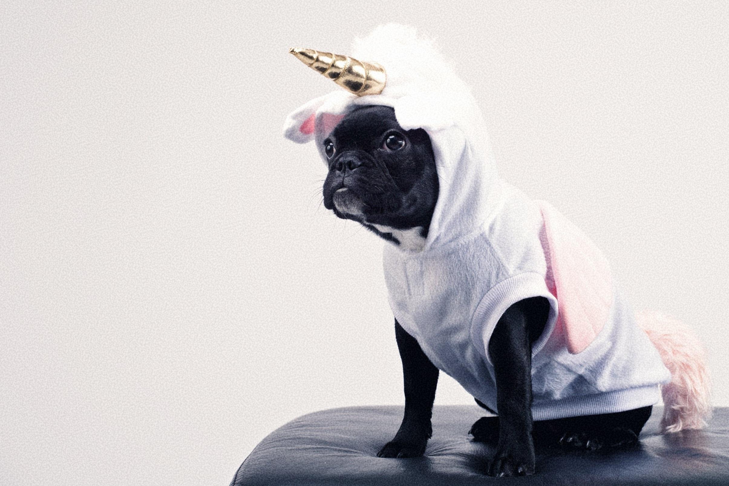 adorable-animal-canine-1564506+%281%29.jpg