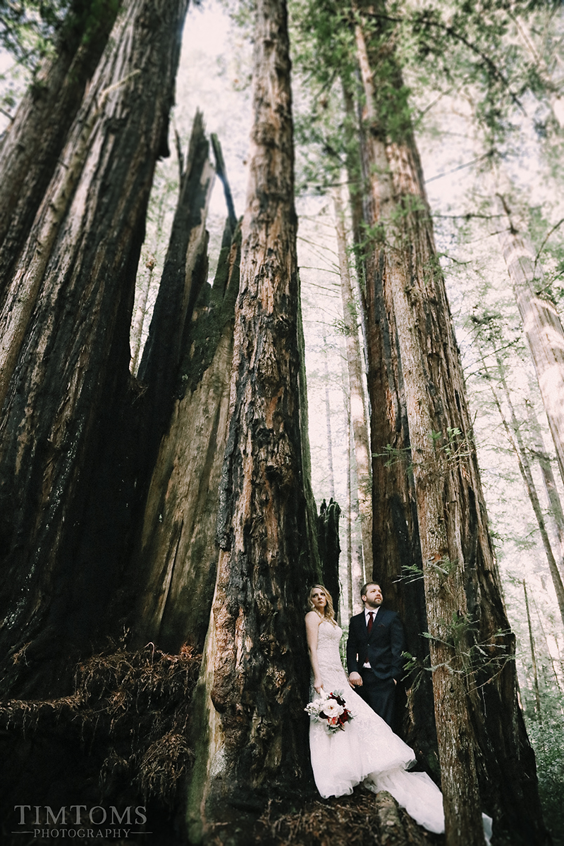 Pacific Northwest Oregon Coast Redwoods Wedding Photographer