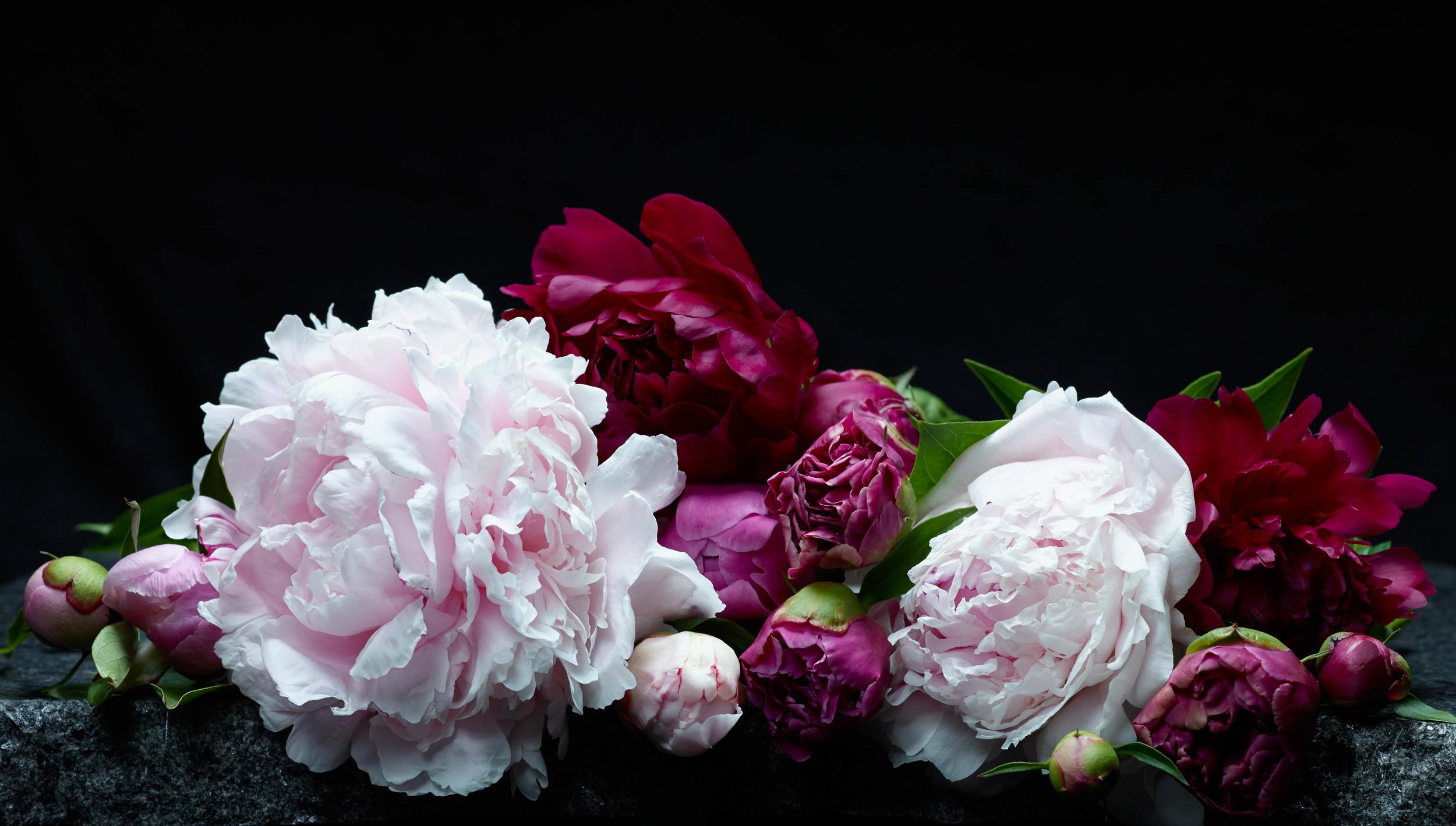 FlowerStillLife_v2_cropped.jpg