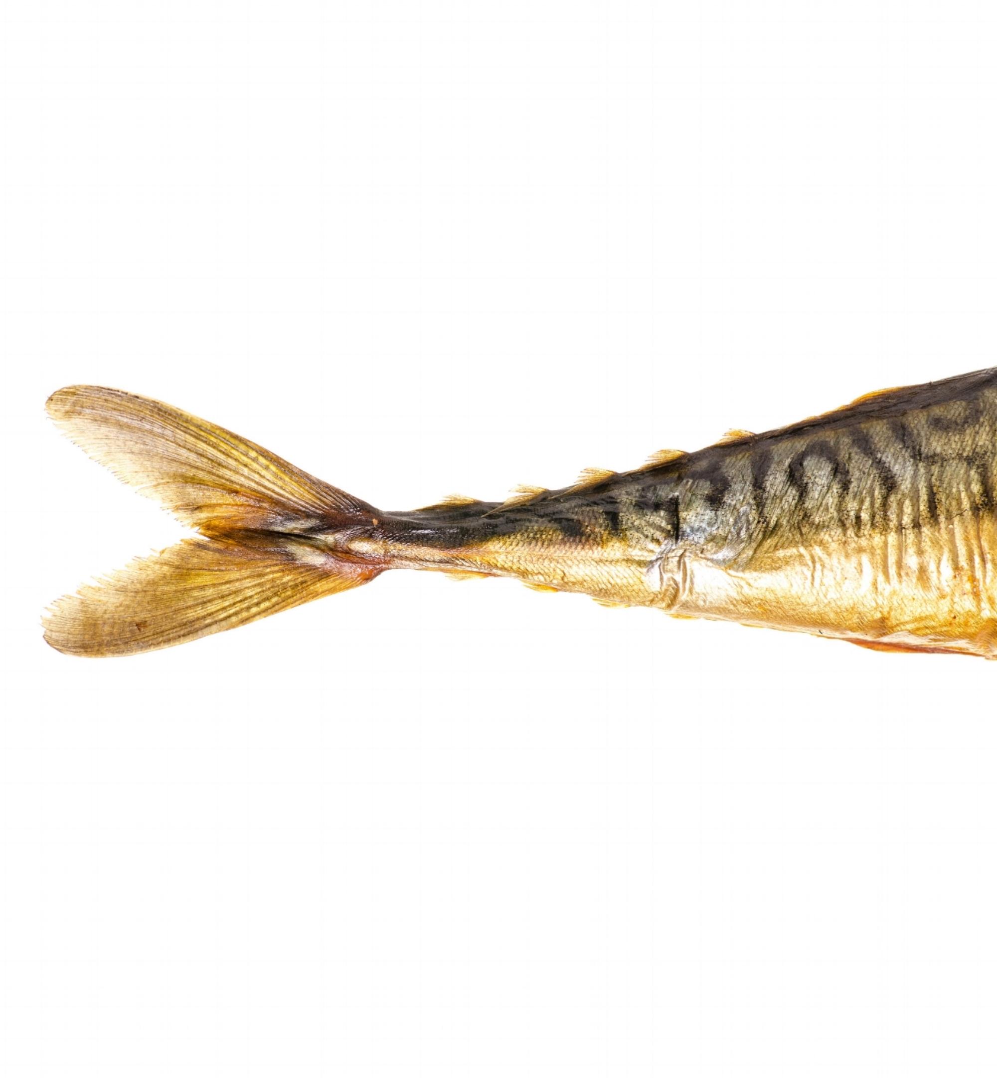 fishtail.jpg