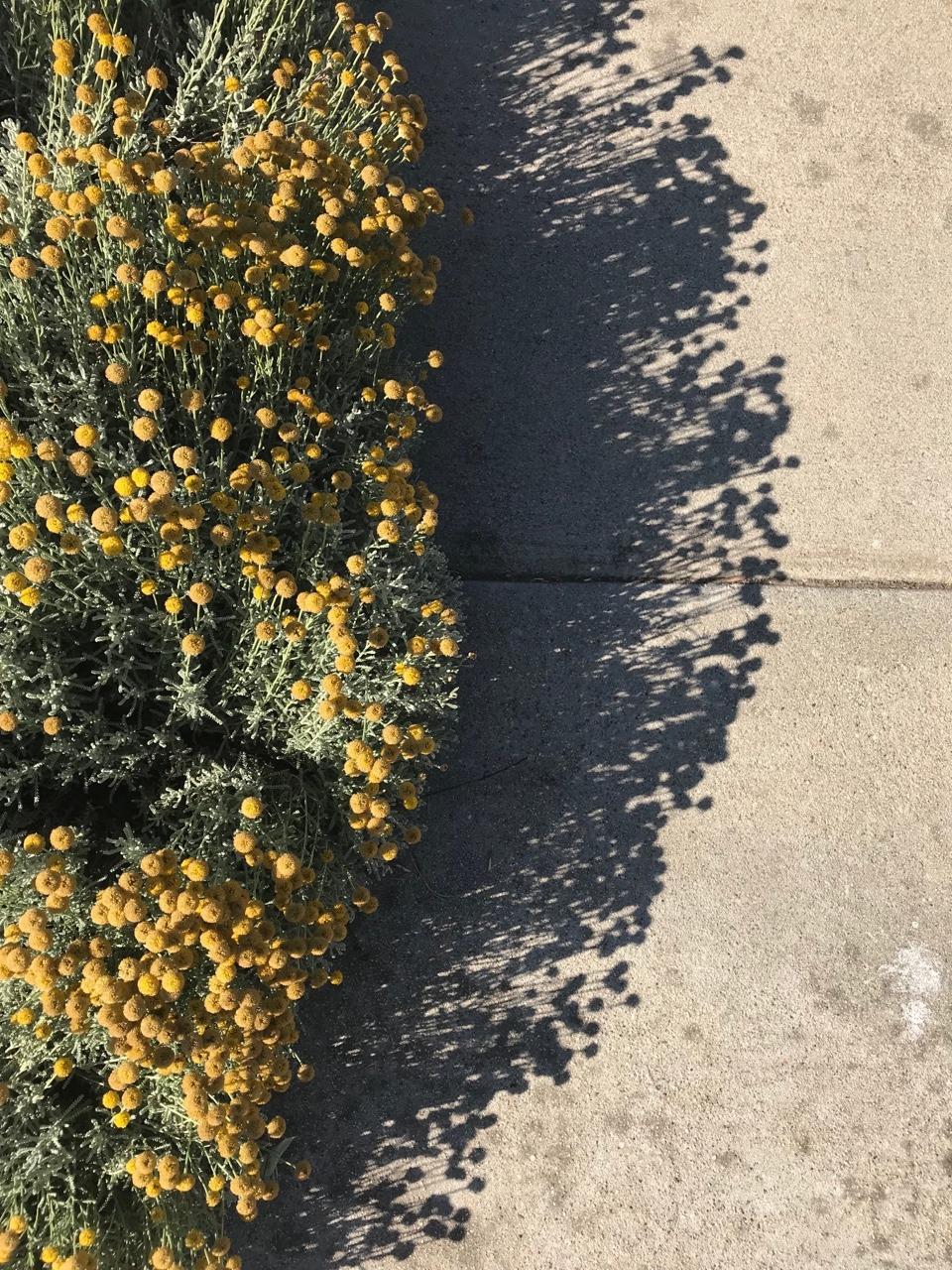 ojai flowers