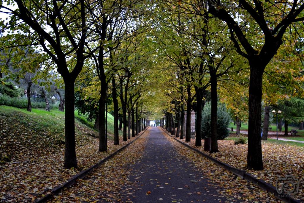 Nature Landscape 50.jpg