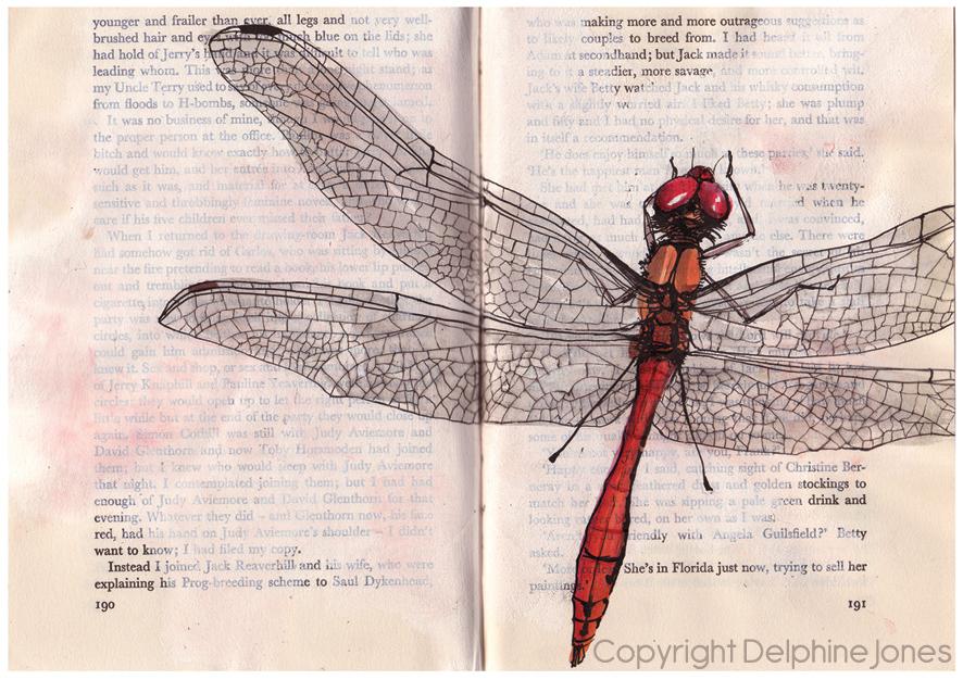 Ruddy Darter dragonfly