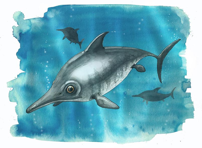 Fossil: Ichthyosaur