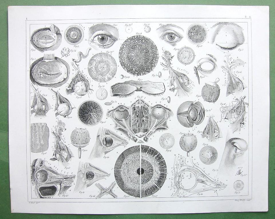 1851-Anatomy-Seeing.jpg