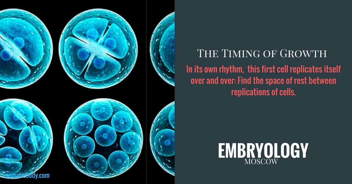 Replication Embryo FLOW 2018.png