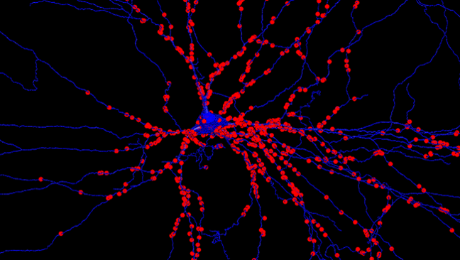 Those blue lines are motor neurons, the tiny cells that control movement. Click on the image for more details. (Photo courtesy of www.brainfacts.org.)