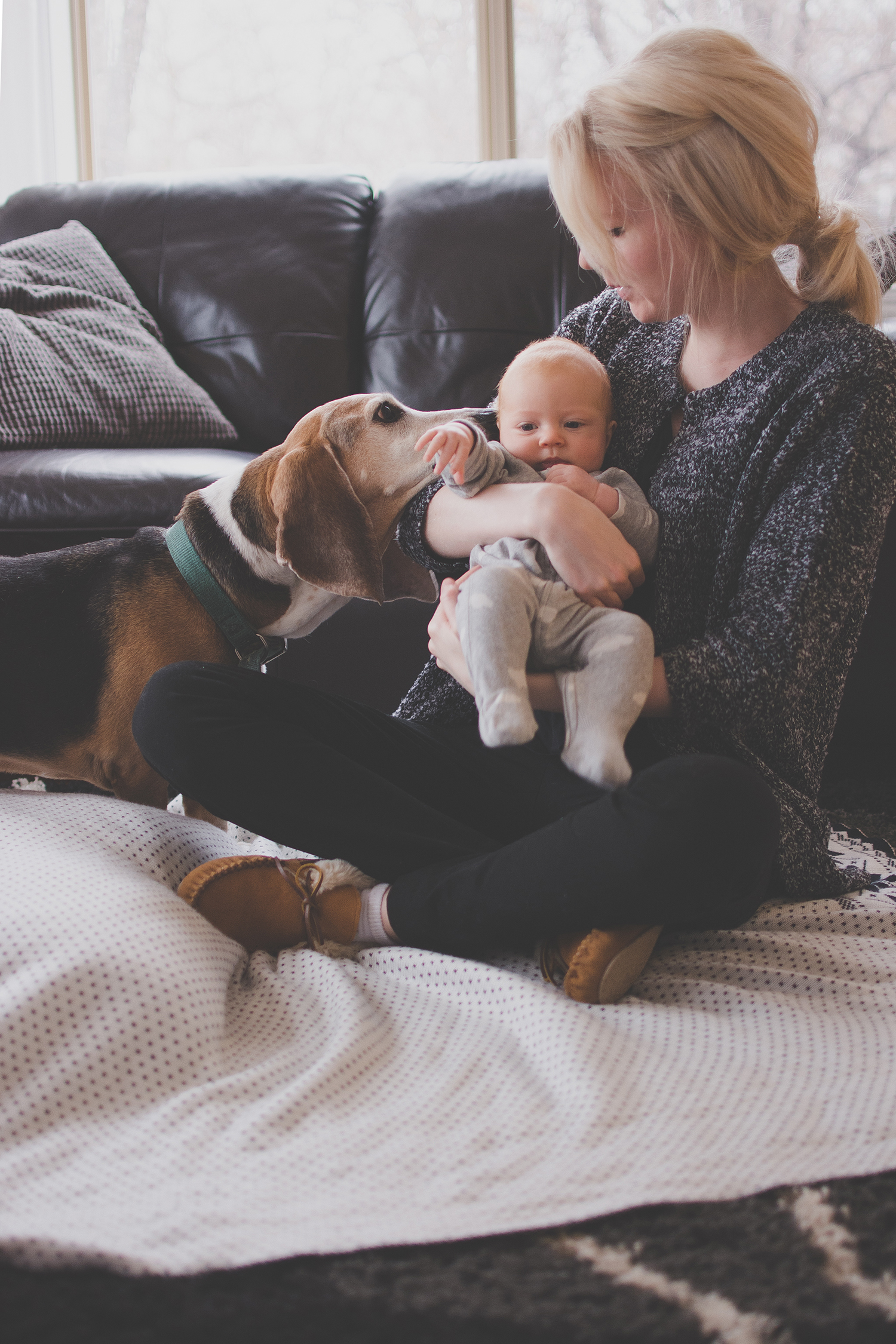 basset hound family picture