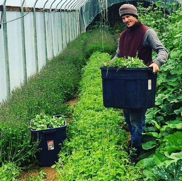 tea farmer.jpg