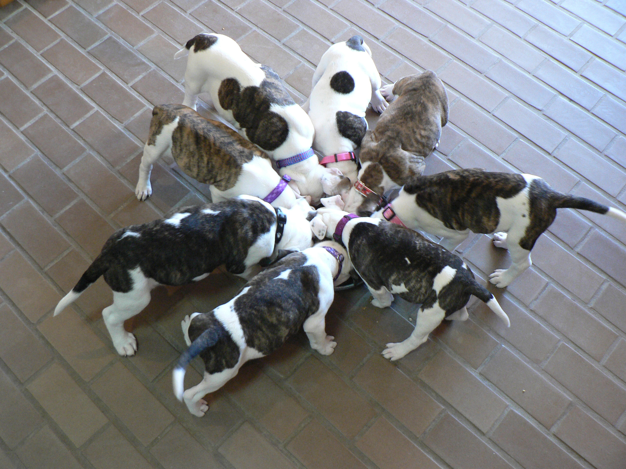 Best-Huddle-HWAC-dogs-eating.jpg