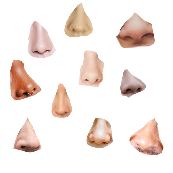 noses.jpg