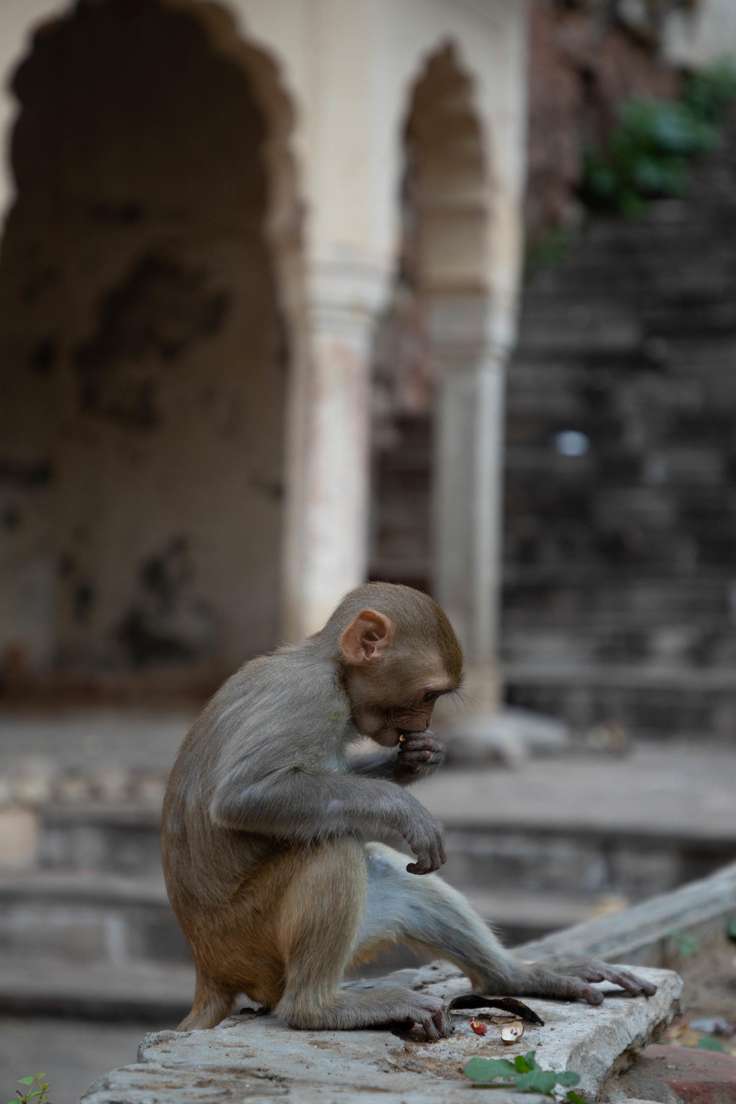 Monkey0.jpg