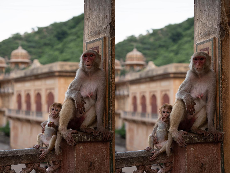 Monkey7.png