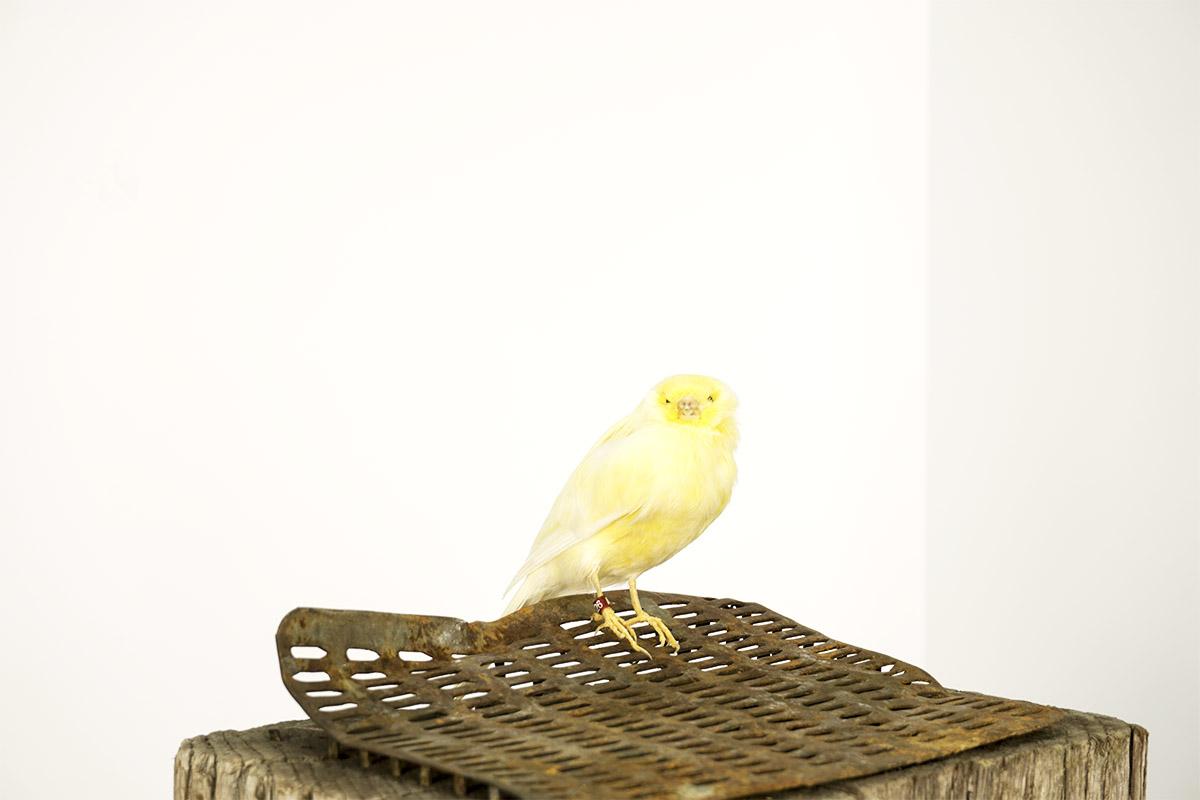 Canary_Detail.jpg