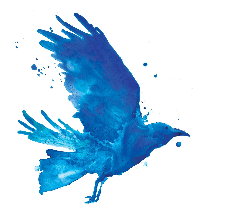 Blue-Crow.jpg