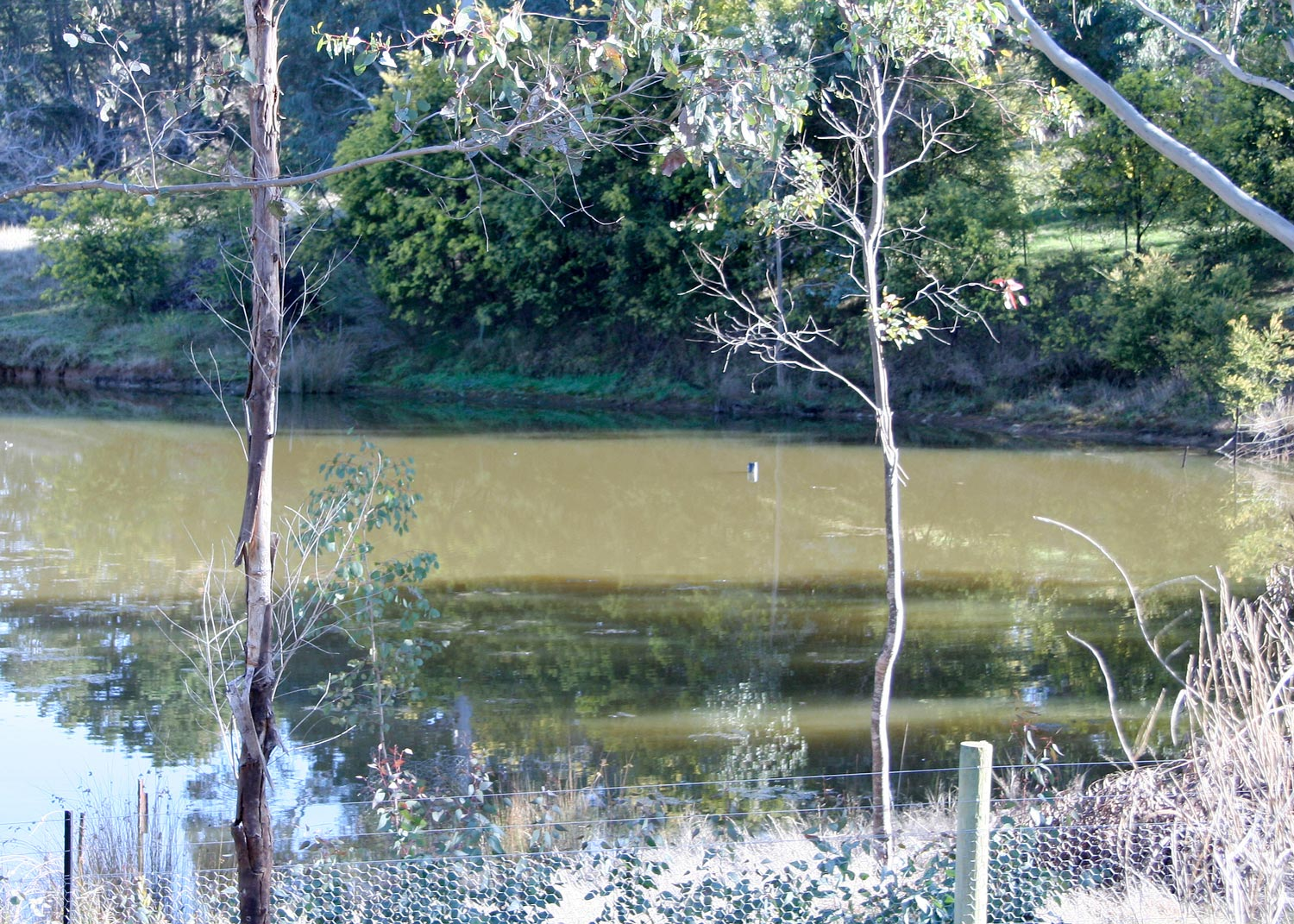A. The Dam  The reflection of the trees in this dam can be clearly seen, as can the shadows lying across the surface of the water. The murky colour of the dam makes the cast shadows more obvious.
