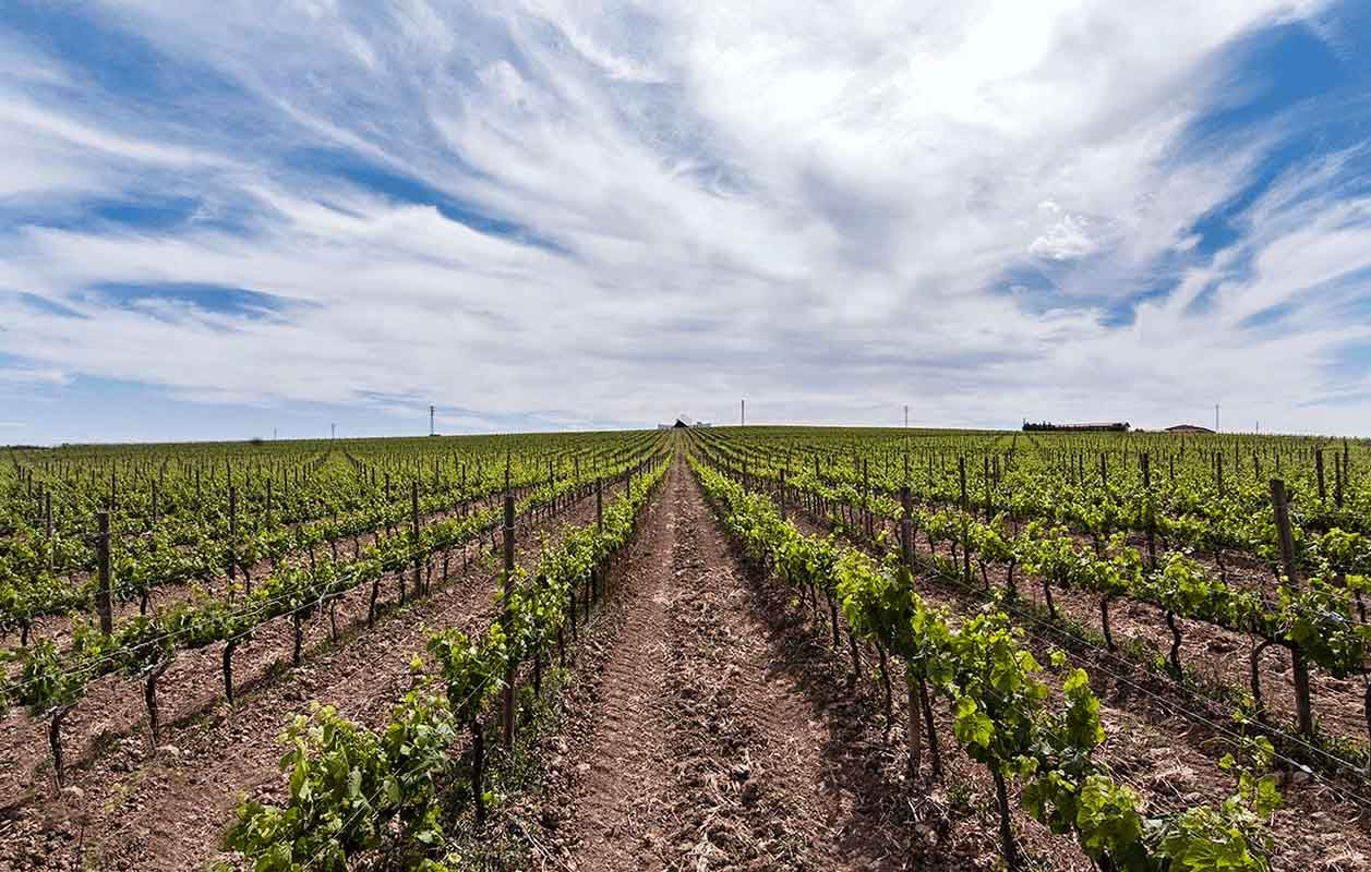Sommos vineyard, winery in distance.jpg