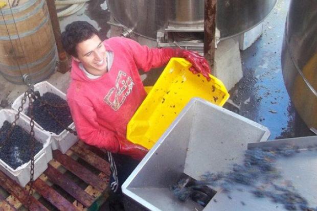 Laureano Gomez processing the harvest.jpg