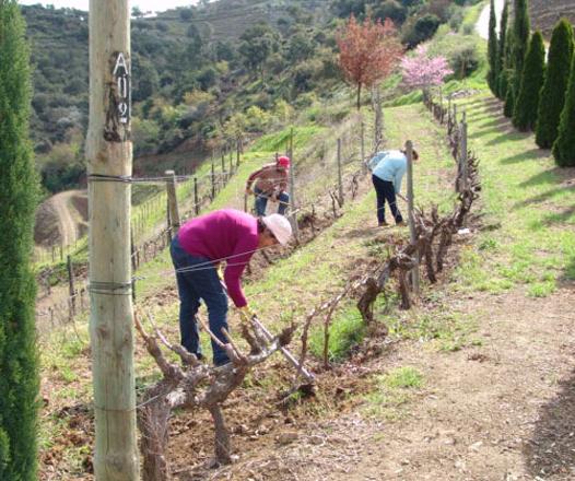 Working the vineyard 2 cropped.jpg