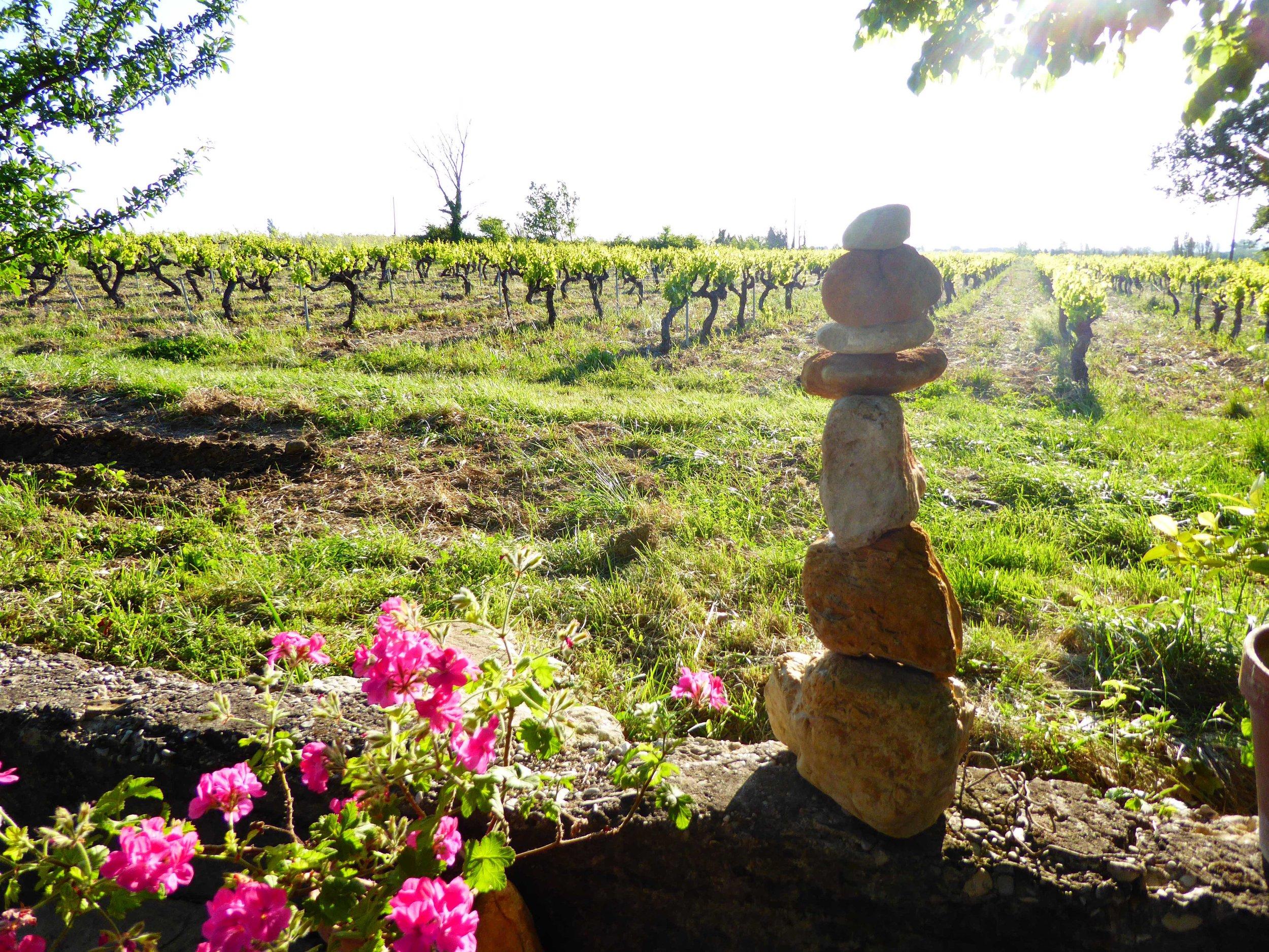 Vineyard in summer.jpg