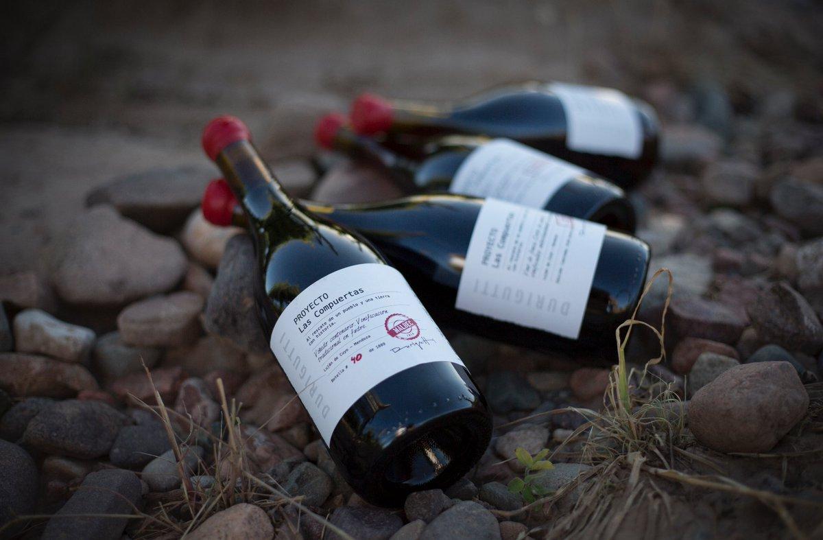 Compuertas bottles in vineyard.jpg