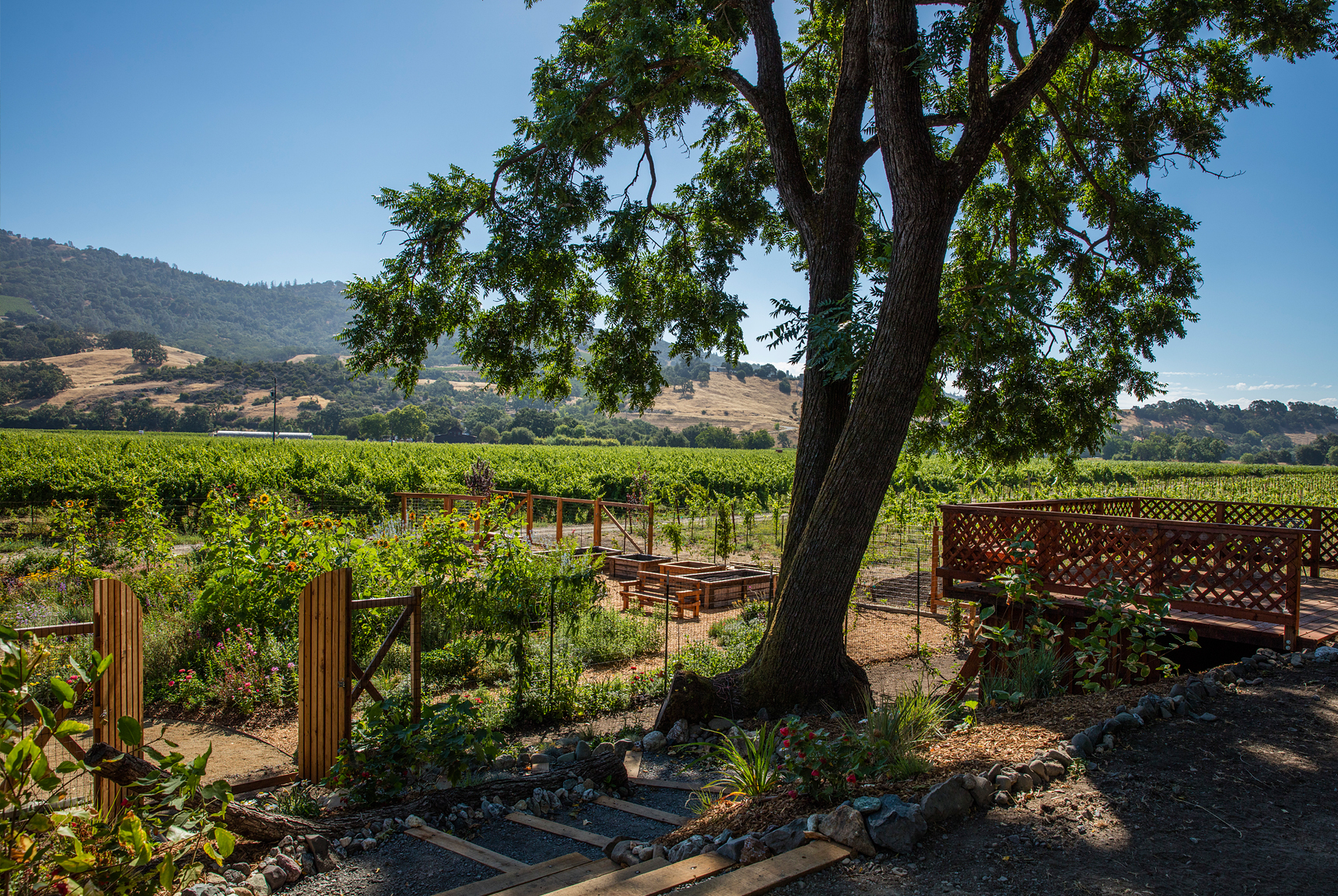The winery's bee garden, next to the vineyards