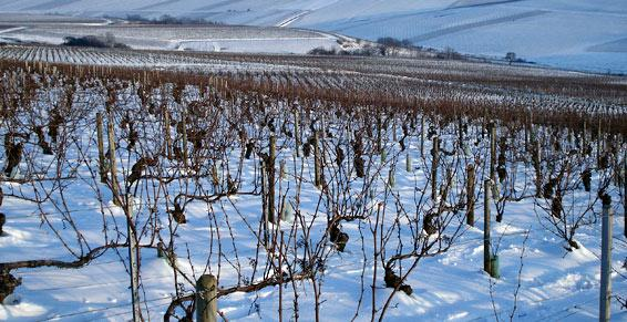 Vineyards in winter.jpeg