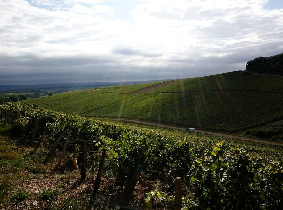 Vineyards after a storm.jpg