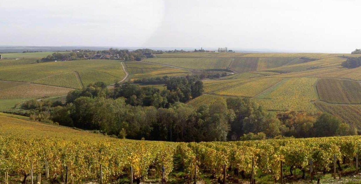 Vineyards panorama.jpg