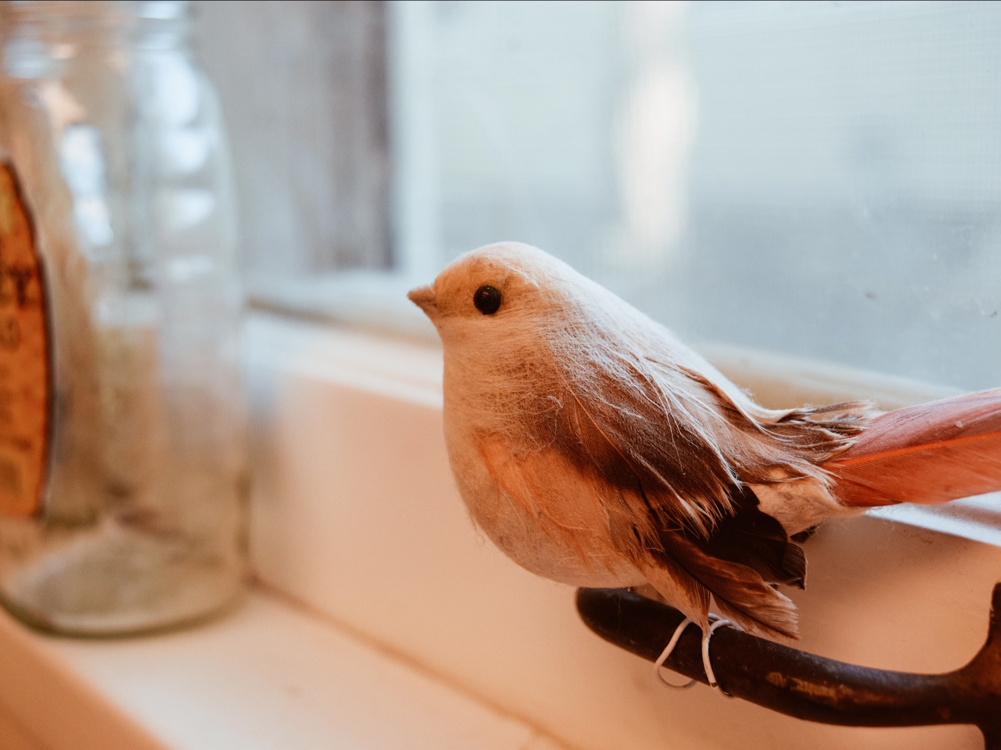 Our little friend on the windowsill.