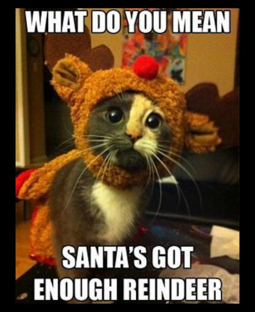enough reindeer.png