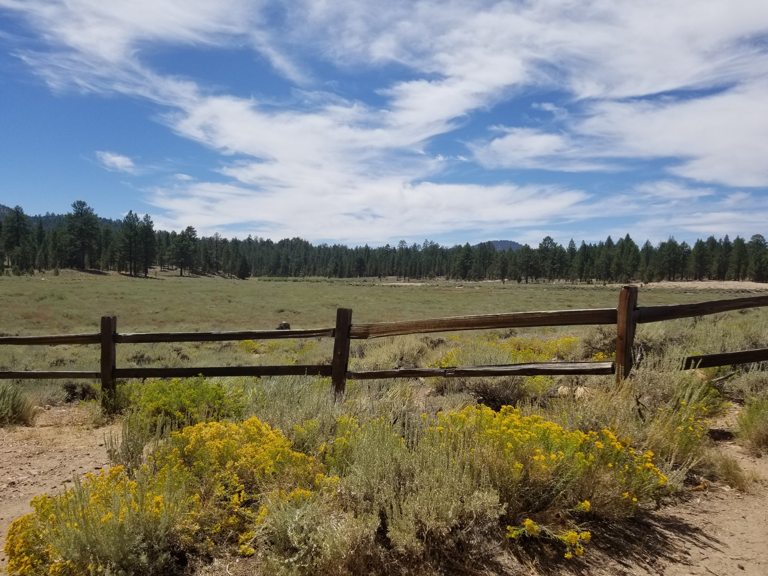 Holcomb Valley