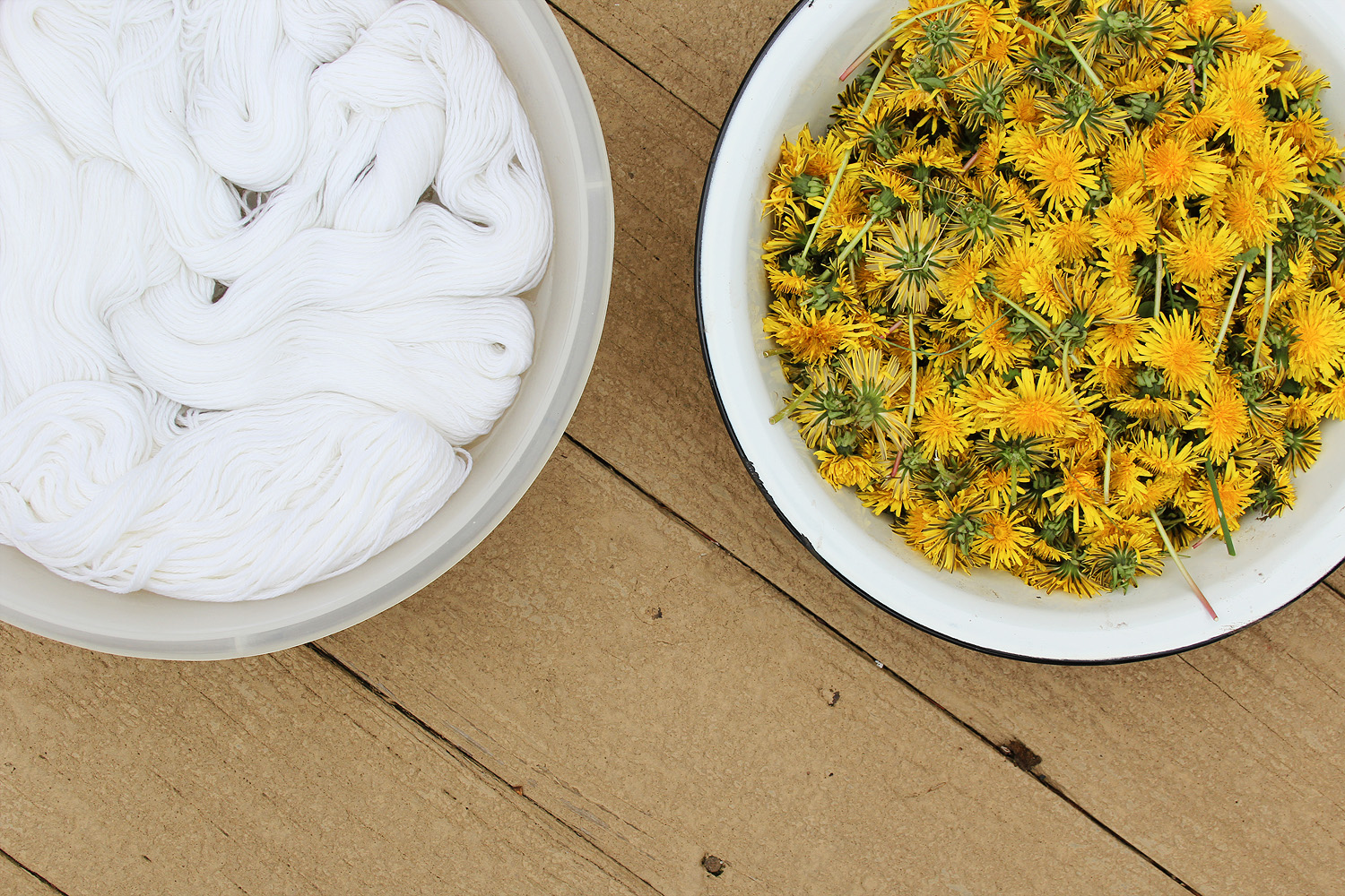 Dyeing with Dandelions