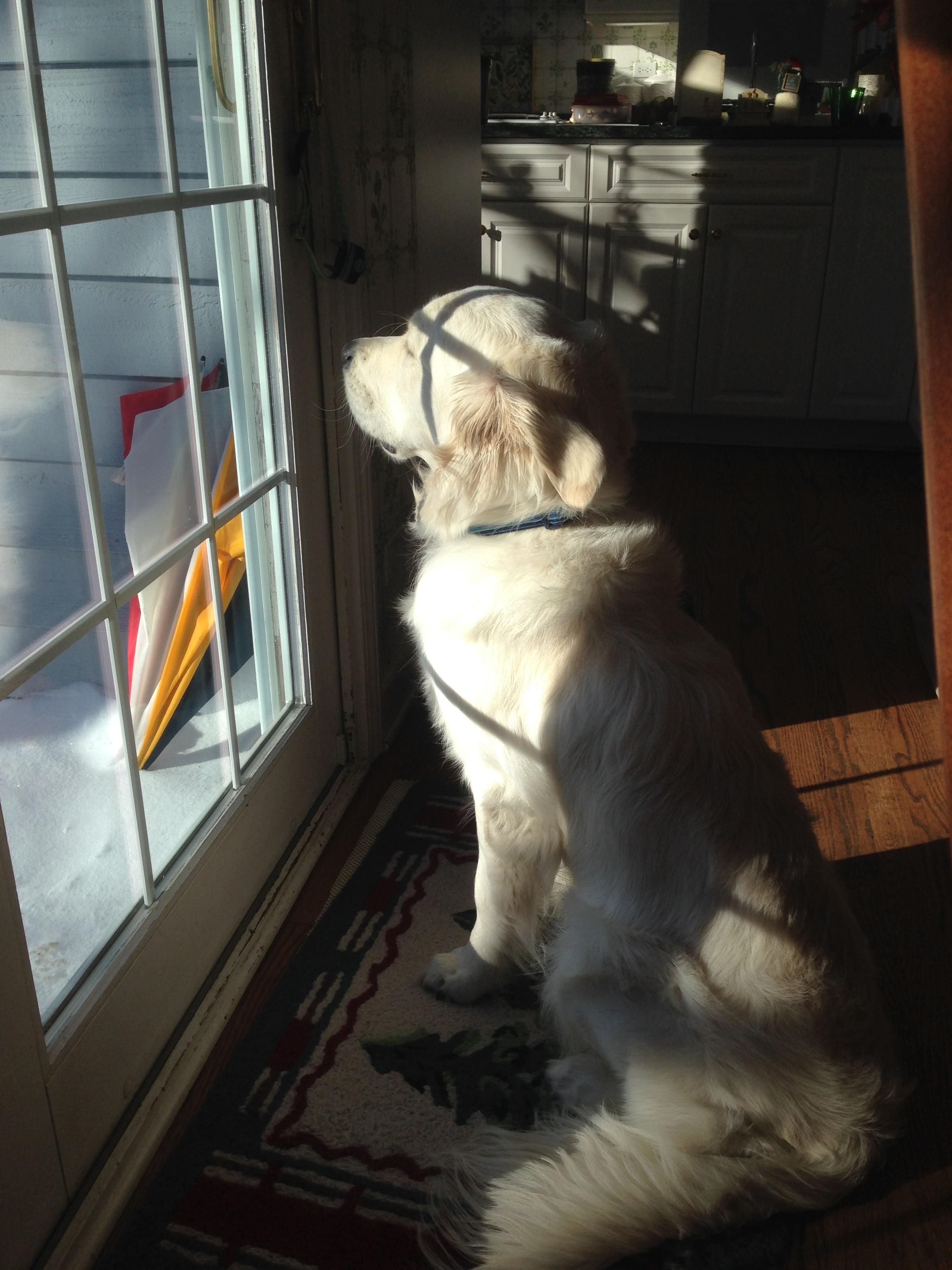Murphy's Reflection