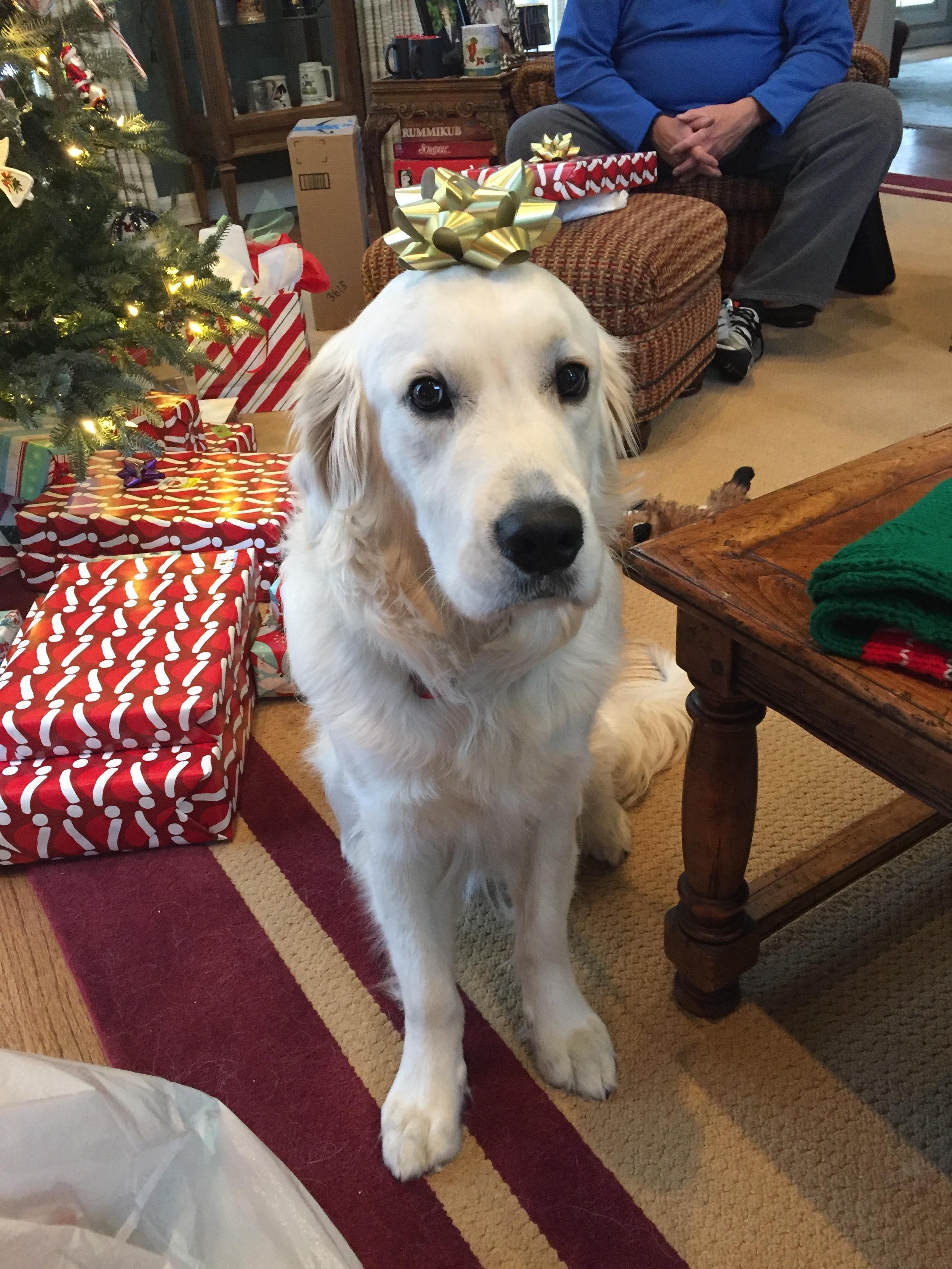 Best Gift Under The Tree