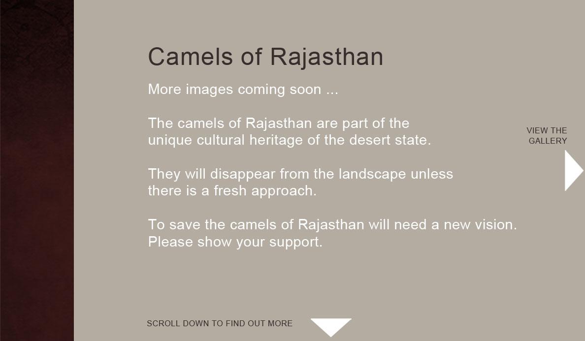 Camels-of-Rajasthan_image-gallery.jpg