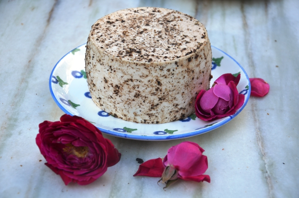 Camel cheese by Robert Paget.jpg