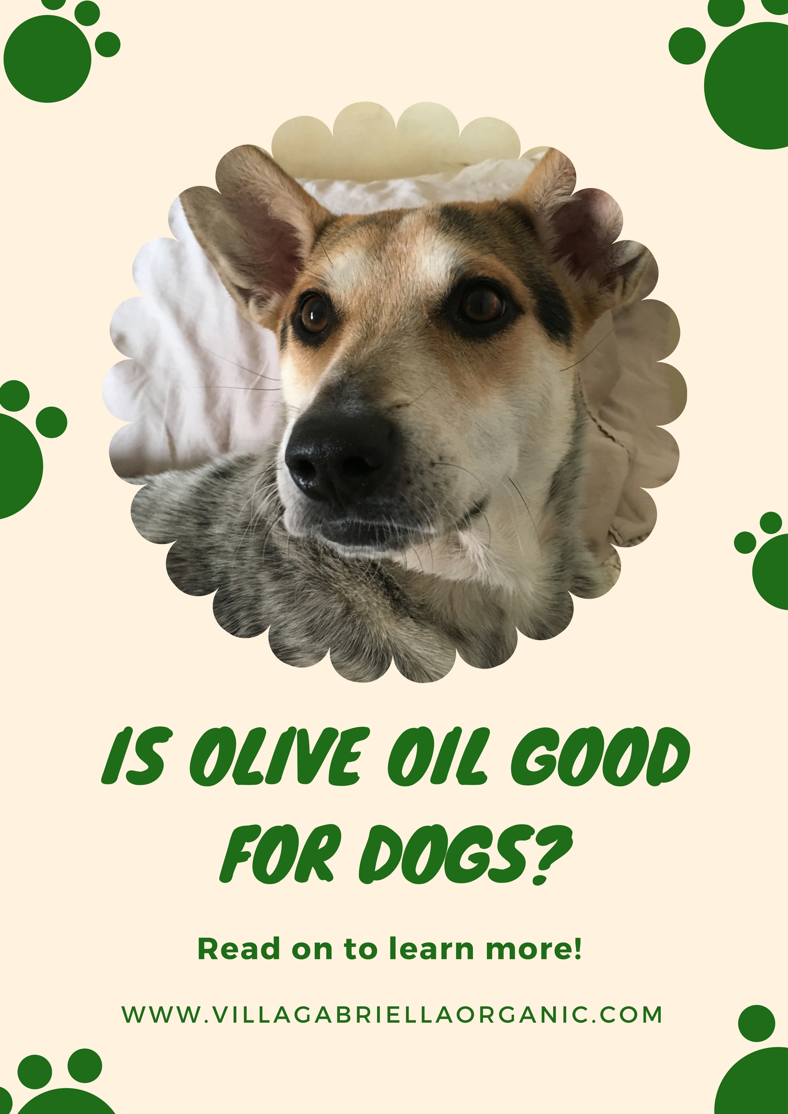 Olive oil and dogs.jpg