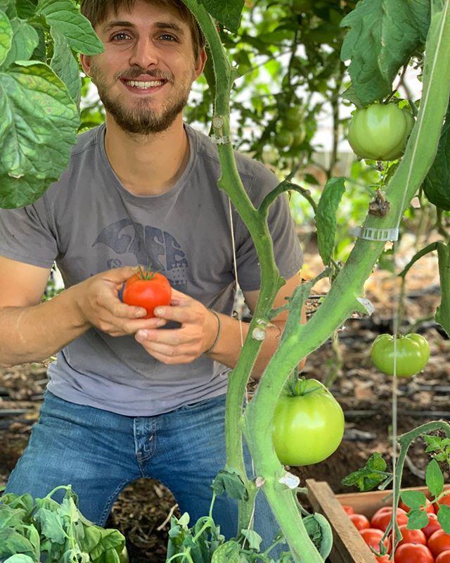 Jared picking slicing tomatoes for @rosaflamingos 🍅