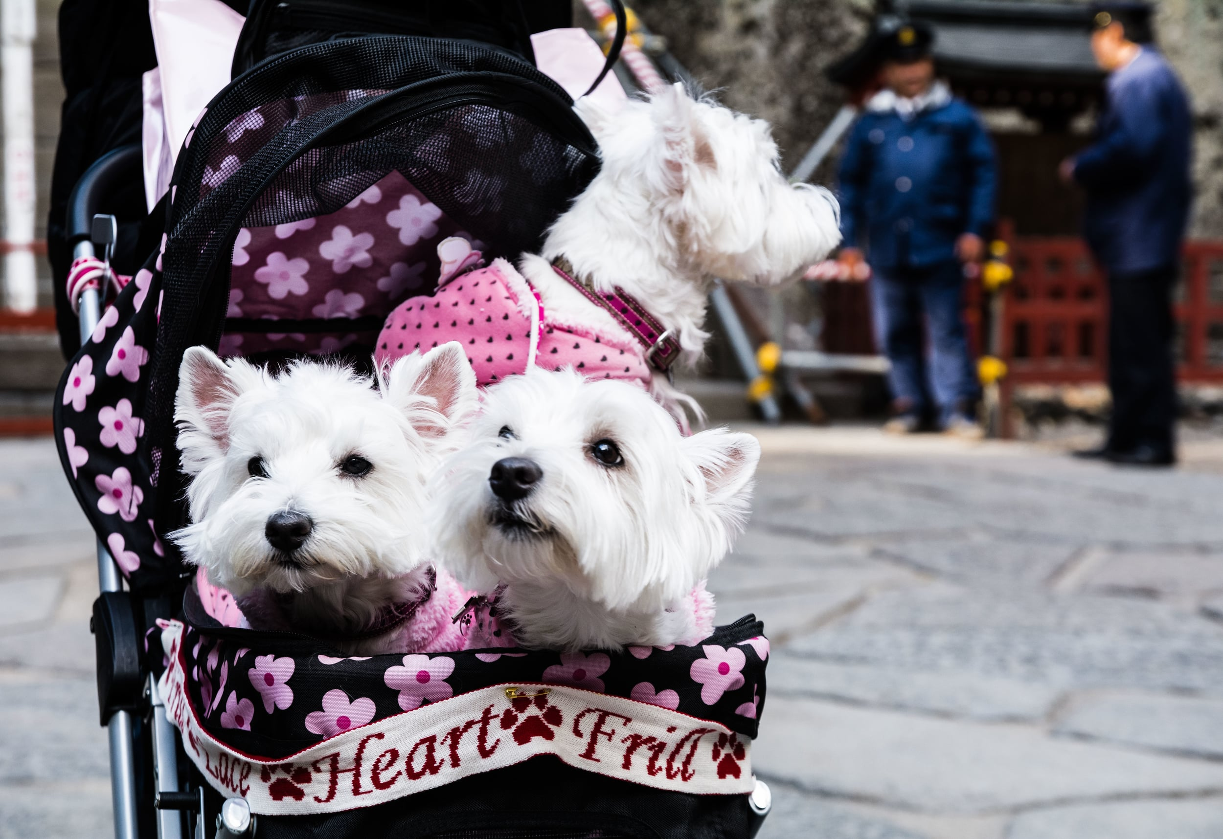 Pups in a baby carriage