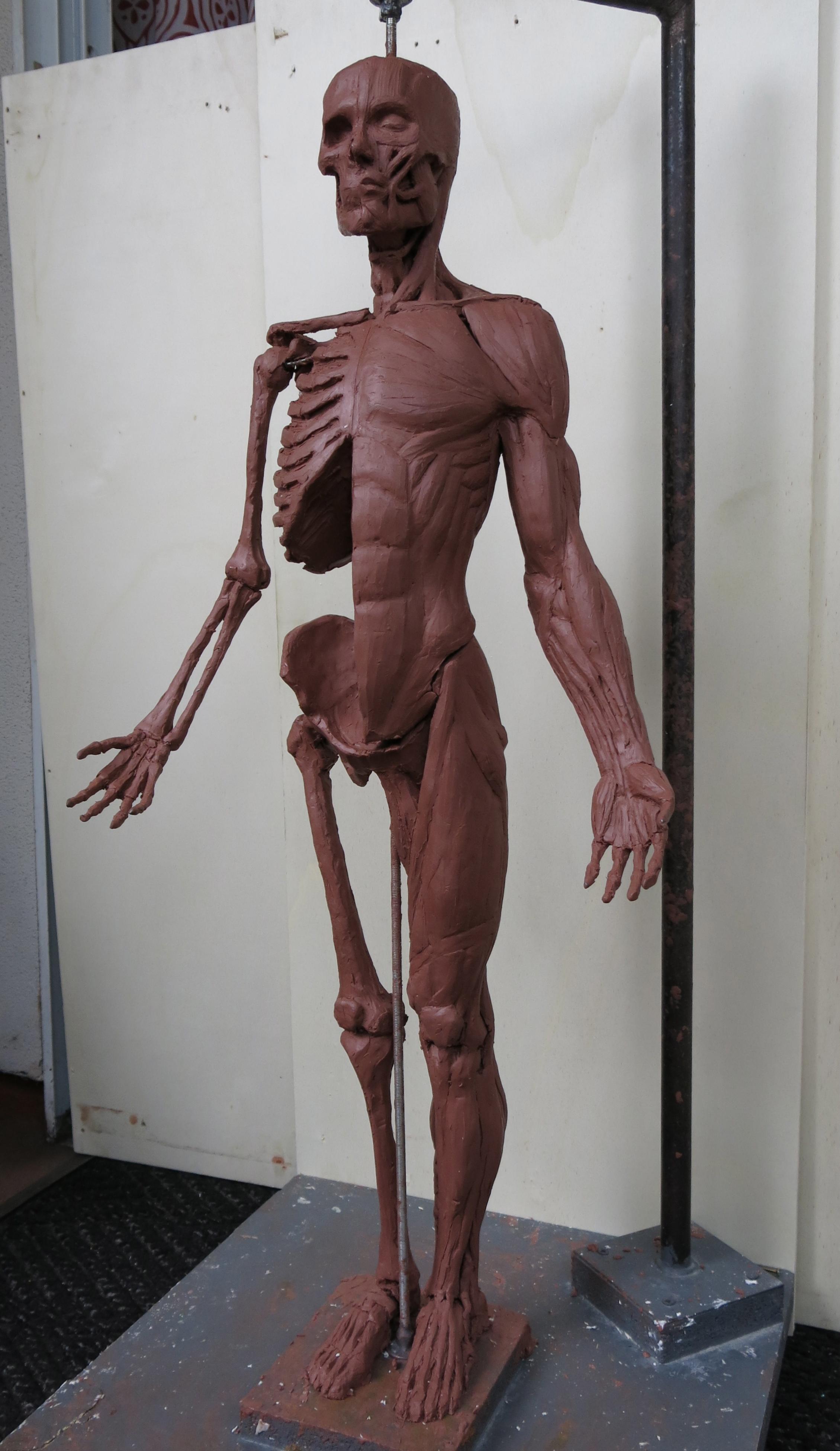 Tringali ecorche sculpture 75cm.jpg