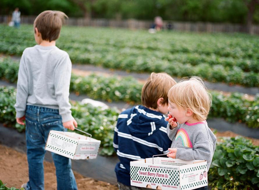 strawberry_picking_austin